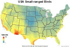 birds_usa_usa_small_thumb