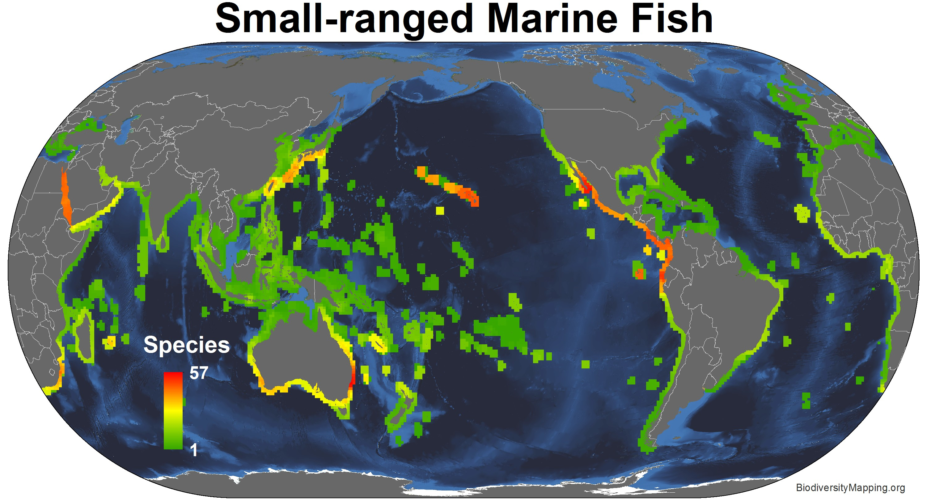 marine_fish_small_ranged