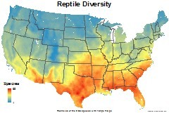 reptiles_usa_total_richness_thumb